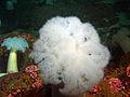 Sanc1635 - Flickr - NOAA Photo Library.jpg