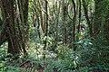 Santa Elena Reserve 06.jpg