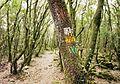 Santoña - trail 3.jpg