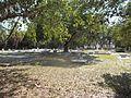 Sarasota FL Rosemary Cem05.jpg