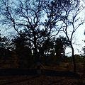 Satpura tiger reserve sunset.jpg