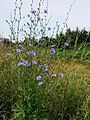 Sauzon fleurs r8 loqueltas -367.jpg