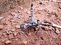 Scorpion (5).jpg