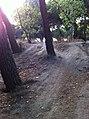 Señores y señoras, seguidores todos. El dia ha llegado. Tortazo con la bici en la casa de campo. El tocon hijoputa (6097823946).jpg