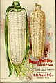 Seed annual, 1899 (1899) (14595284917).jpg