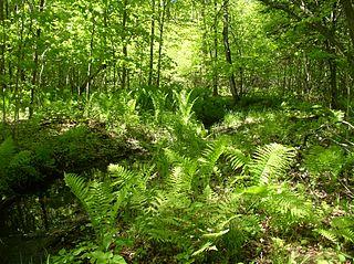 Keddy Nature Sanctuary