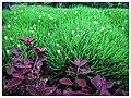 Seethawaka Botanical Garden plant species.jpg