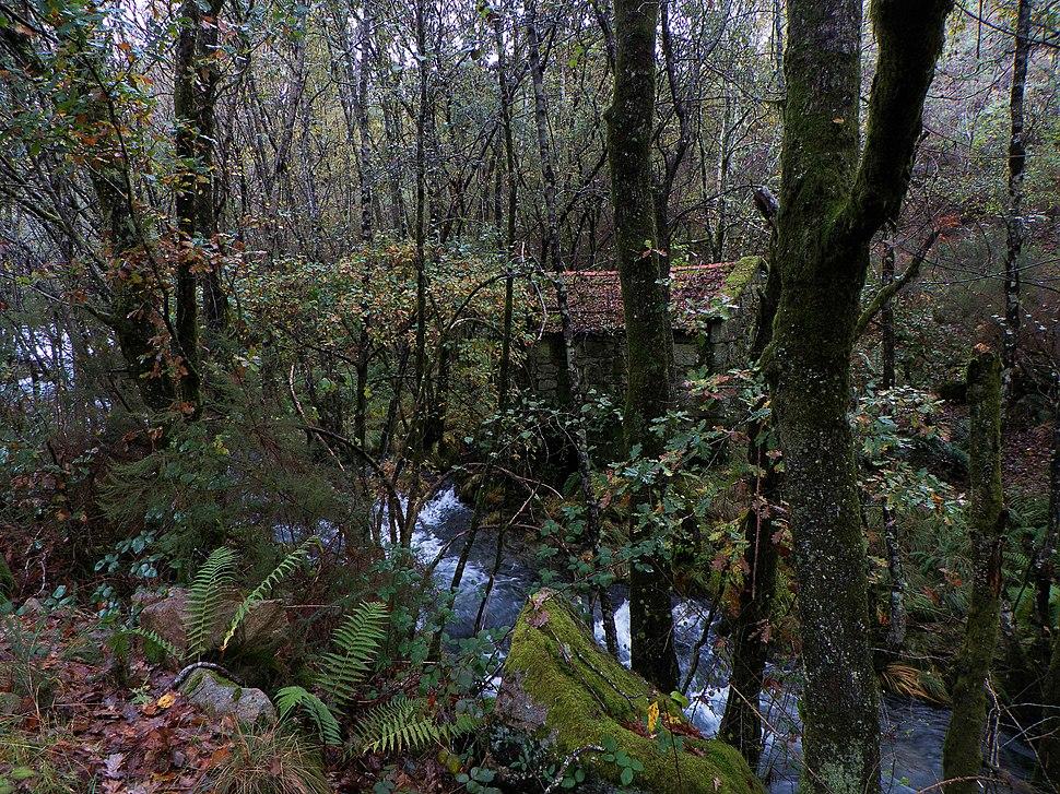 Sendeiro do Foxo do Lobo, río Verdugo, Ponte Caldelas