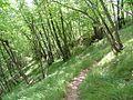 Sentiero per Bocconi - panoramio.jpg