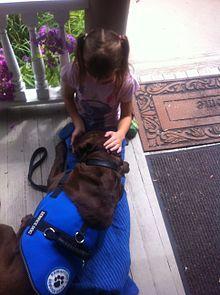 Psychiatric Assistance Dog Training Burwood Vic