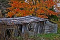 Shed and Tree (3049606475).jpg