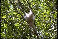 Shenandoah National Park SHEN9136.jpg