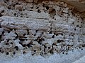 Silvercreek Wash - Wasp Nests - panoramio.jpg