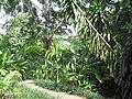 Singapore Zoo 26.JPG