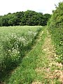 Skirting a field's edge - geograph.org.uk - 1341818.jpg