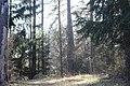 Skogssjön 07.jpg