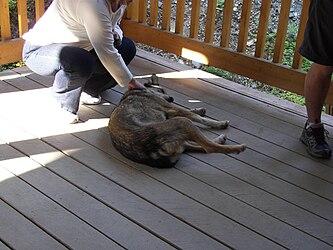 Sled Dog Discovery & Musher's Camp 28.jpg