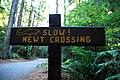 Slow! Newt Crossing.jpg