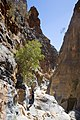 Snake Gorge (2).jpg