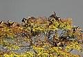Snake bird nesting.jpg