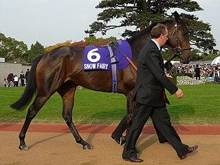 Snow Fairy Irish-bred Thoroughbred racehorse