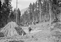 Soldaten beim Bau eines Köhlers im Schweiz. Nationalpark - CH-BAR - 3239906.tif