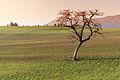 Solingo albero austriaco (13154505953).jpg