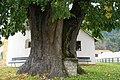 Sommer-Linde mit Steinaltar in Tiffen.jpg