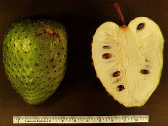 Annonacin - Soursop fruit, a source of annonacin