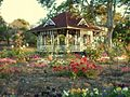 Spring flowers in the warm afternoon sun at the Memorial Park, Gympie - panoramio.jpg
