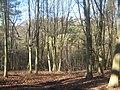 Sproud's Wood - geograph.org.uk - 1732353.jpg