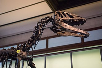 Museum of Natural Sciences - Image: Squelette de dinosaure du Muséum des sciences naturelles de Belgique