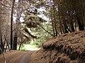 Starr 070908-9179 Pinus sp..jpg