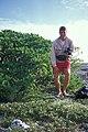 Starr 990412-0416 Solanum nelsonii.jpg