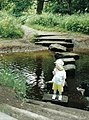 Stepping Stones over the river Lostock - geograph.org.uk - 259089.jpg