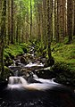 Stream in forest near Cannich - geograph.org.uk - 944243.jpg