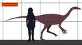 Struthiomimus SIZE.png