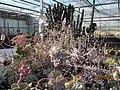 Succulents (4578497154).jpg