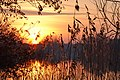 Sunset Rietplas (11912358163).jpg