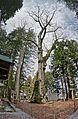 Suwa taisha Kamisha Honmiya , 諏訪大社 上社 本宮 - panoramio (3).jpg
