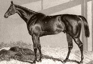 Sweetmeat (horse) - Image: Sweetmeat (GB)
