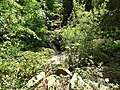 Tübingen — Neuer Botanischer Garten — Tal.JPG