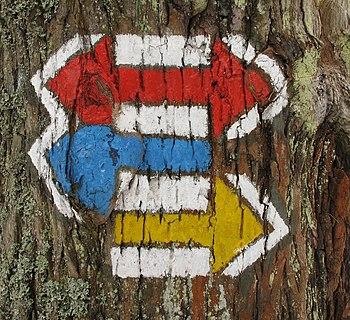 Trail blazings on a tree, Czech Republic.