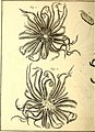 Tableau encyclopédique et méthodique des trois règnes de la nature (1791) (14581539798).jpg