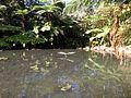 Tamborine Mountain Botanic Gardens 10.JPG