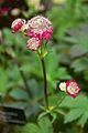 Tatton Park Flower Show 2014 095.jpg