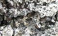 Tellurium-Quartz-177677.jpg
