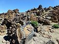Teneriffa - Teide-Nationalpark – Caldera de Las Cañadas - Steingarten - panoramio.jpg