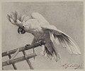 The Angry Parrot MET 23.280.1.jpg