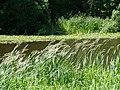 The Broadwater Walk - geograph.org.uk - 1369191.jpg